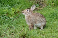 konijntje ruikt onraad